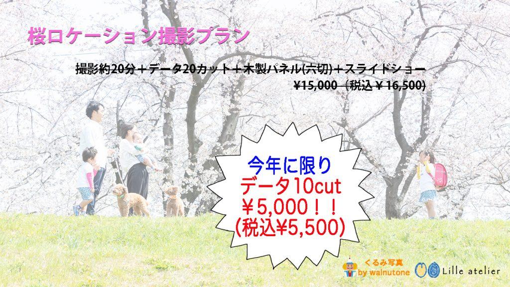 桜 ロケーション撮影 入園 入学